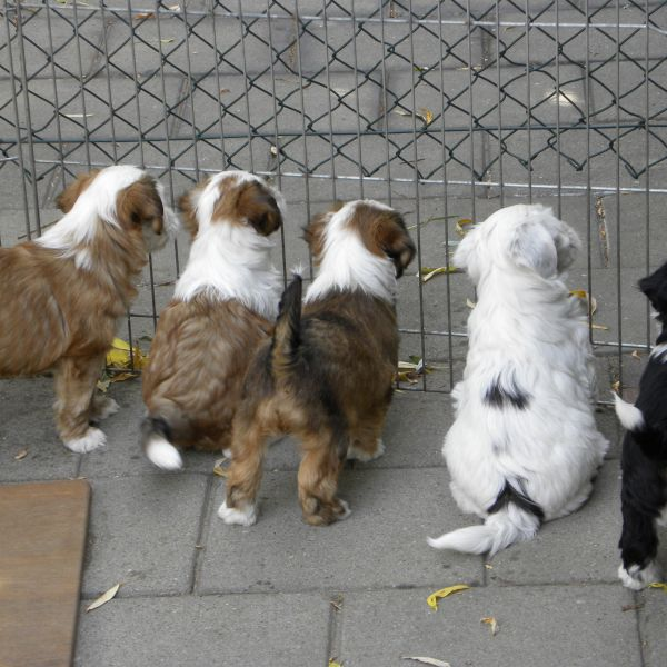 Zo kies je een gezonde en sociale hond