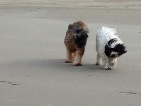 Uitwaaien op strand