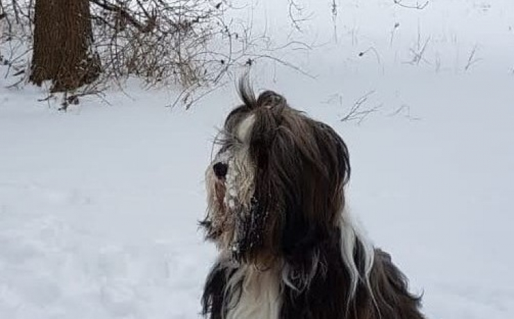 sneeuw !!