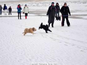 winterwandeling_2012_(18)