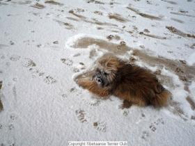winterwandeling_2012_(20)