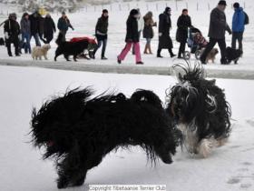 winterwandeling_2012_(6)