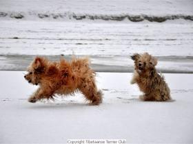 winterwandeling_2012_(8)